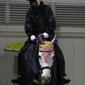 写真: 川崎競馬の誘導馬04月開催 重賞Ver-120409-02-large