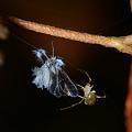 写真: ヒメグモの仲間