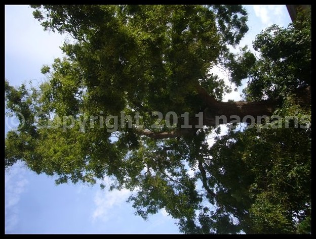 Photos: P2870986
