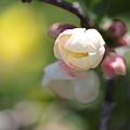 Photos: 我が家の春 ?