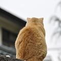 写真: 猫は背中で…