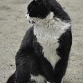 写真: 猫と遊ぶ(2)
