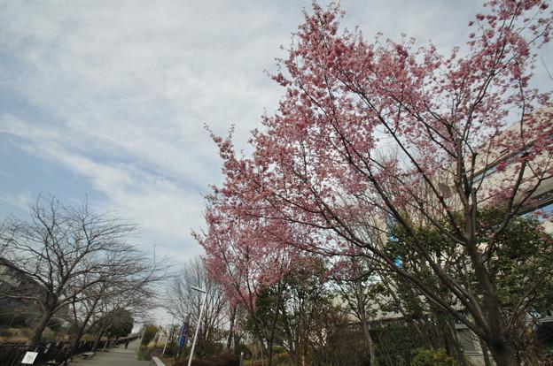写真: DSC_0923