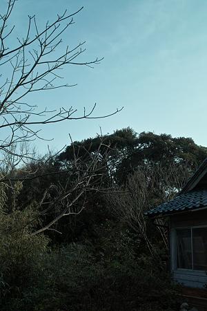 Trees03082012dp2