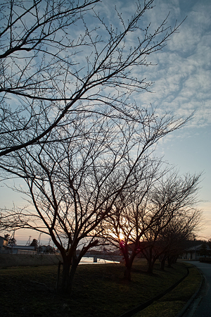 Trees_in_the_dawn03162012dp1