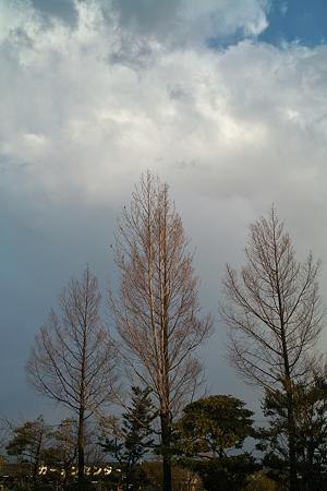 trees04072012dp2