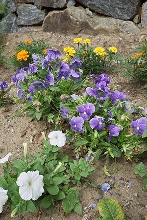 Flower07022011sd15-08