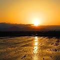 写真: 田んぼの黄金