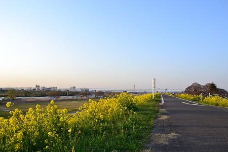 春の風景@江戸川河川敷[千葉]