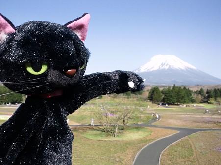 富士山ぬ。富士芝桜まつり2011