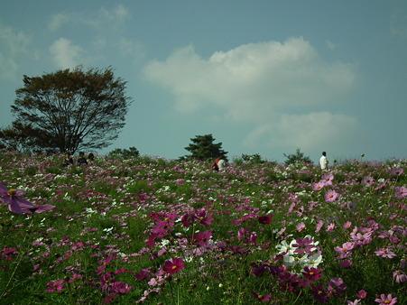 昭和記念公園 429
