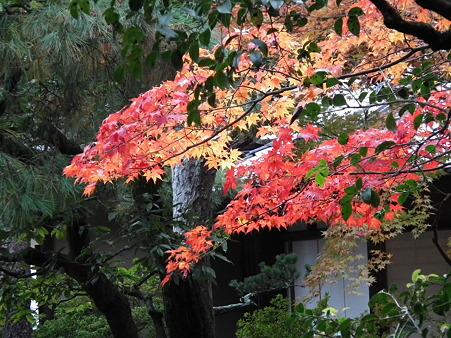 京都 531