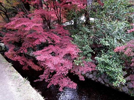 京都 677