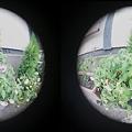 写真: 3D魚眼 植物
