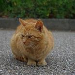 猫好き@町火消し