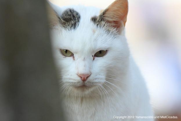 Photos: yamanao999_cats_083