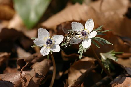 二輪の花…
