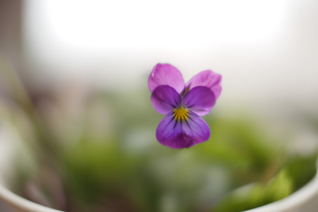 写真: Nokton 17.5mm試写014(接写:開放F0.95)