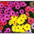 Photos: Colorful☆