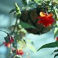 写真: 201201-02-028PZ