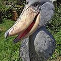 Photos: ちいが見せてくれた鳥の画像...