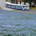 Photos: 国営ひたち海浜公園 シーサイドトレイン