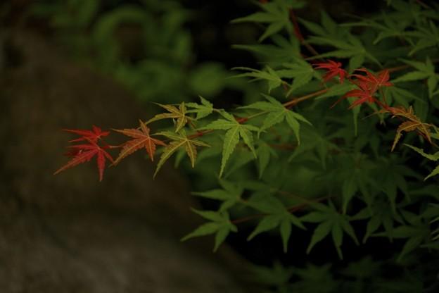 6月なんだけど、美しい紅葉