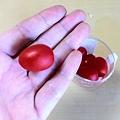 写真: フルーツトマトだって。小さくて甘い。でもトマト味。