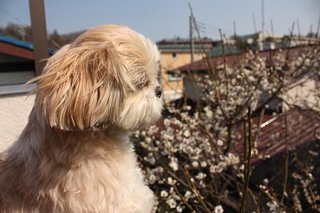 梅とくるみ2