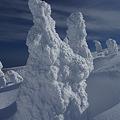 写真: 巨大樹氷・山形