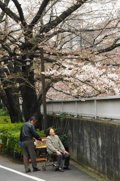 母さん桜が咲いたよ