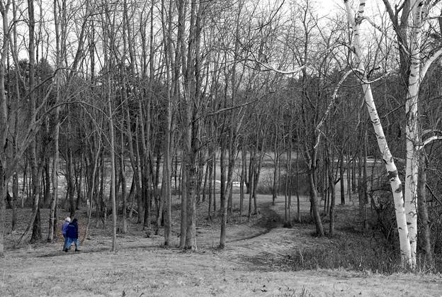 写真: To the Path 2-18-12