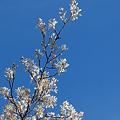 Photos: White on Blue