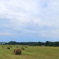 Bales of Hay 8-14-11