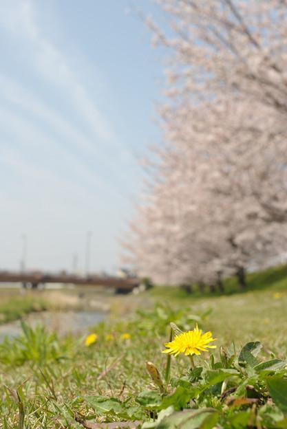 春の陽気 (3) 2011年 4月 小さな春