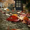 【秋のコンクール用】落葉