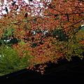 Photos: 高山寺 開山堂の紅葉_03