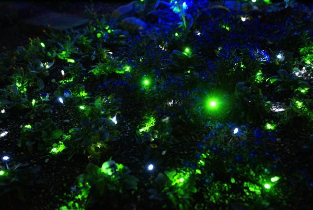 エコエンジェル2011 緑の光_02
