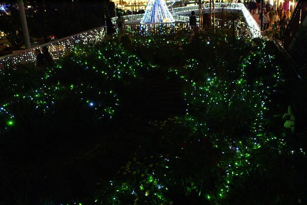エコエンジェル2011 緑の光_04