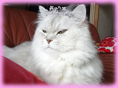 猫の王妃様ユズ