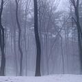 Photos: 女神の森の目覚めはもうすぐ