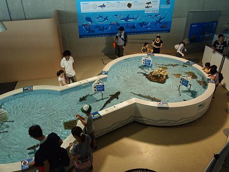 サメのタッチプール