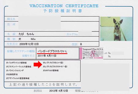 たび予防接種のコピー