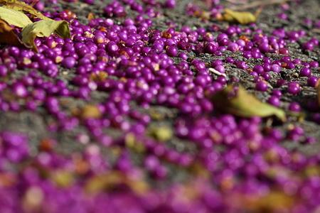 紫のカーペット
