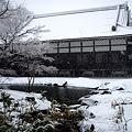 Photos: 円覚寺方丈20120229