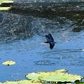 写真: 蝶トンボ飛ぶ