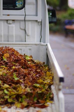 秋を運び去る。