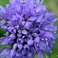 写真: 201105flower 485