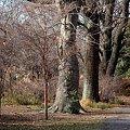 Photos: 巨樹の森(2)