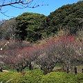 上野~小石川散歩4